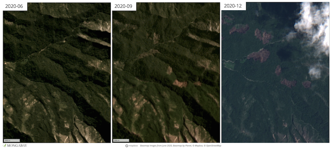 Satellite imagery shows recent deforestation encroaching above 1,600 meters in elevation, which researchers say provides the most important habitat for the region's endemic species.