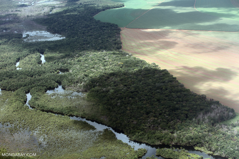 Riparian forest and soy. Image by Rhett A. Butler/Mongabay.