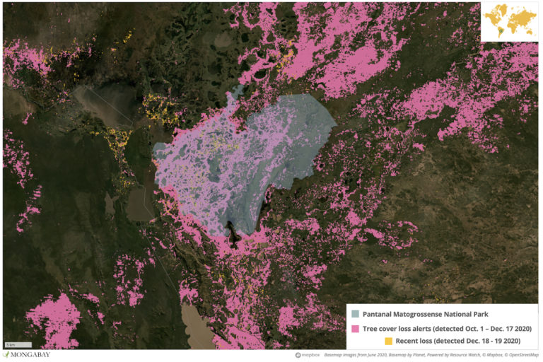 Satellite data show huge areas of tree cover loss in Pantanal Matogrossense National Park following the latest spate of wide-ranging, out-of-control wildfires.
