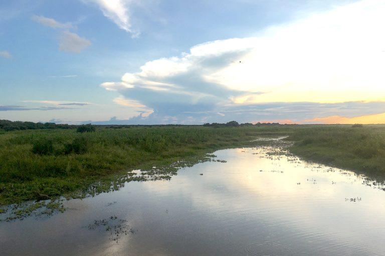 The Pantanal is the world's largest wetland. Image by Ana Ionova for Mongabay.