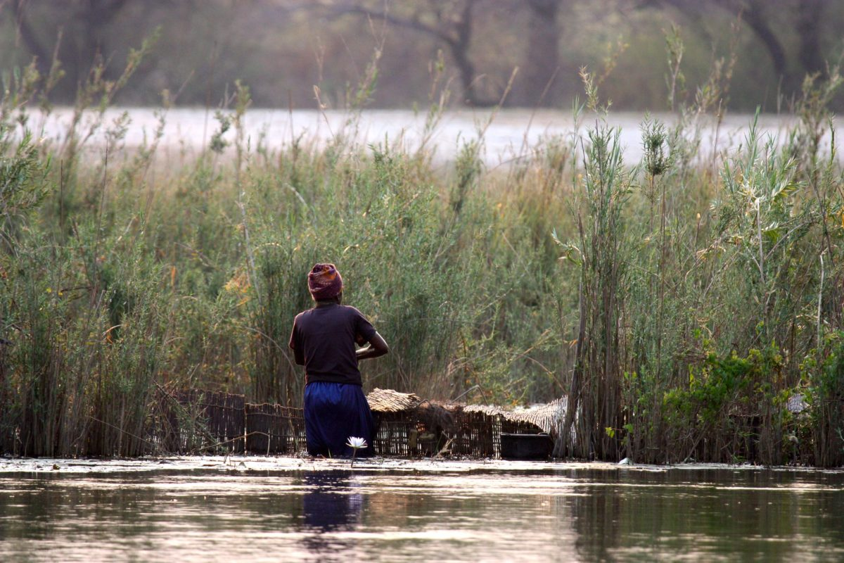 Woman maintaining fish trap in waist deep water near Mashare, Namibia. Image by Mp3ief via Flickr (CC BY-NC-SA 2.0)