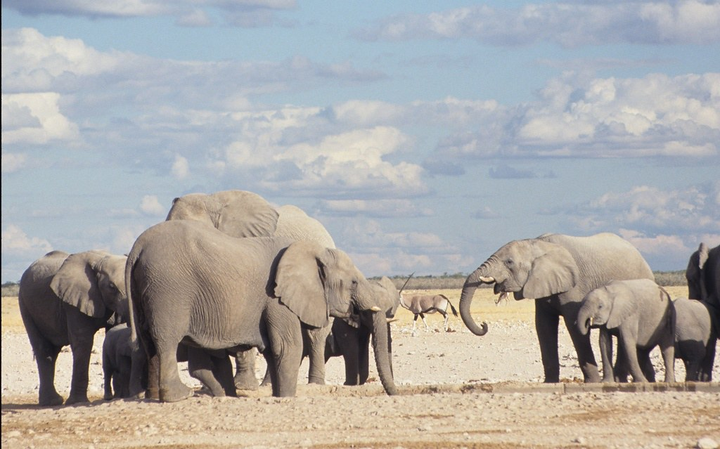 Elephants, Namibia. Derek Keats via Flickr (CC BY 2.0)
