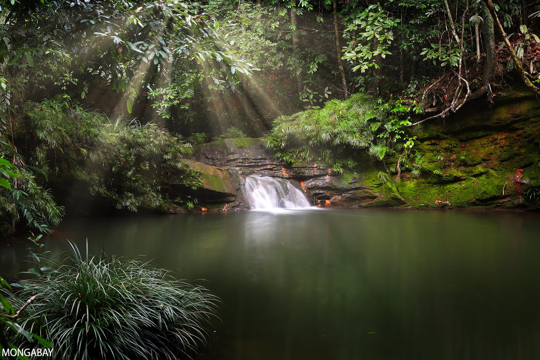 Rainforest in Borneo. Photo by Rhett A. Butler