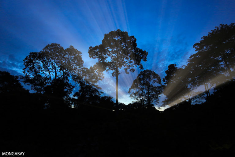 Malaysian rainforest at sunset. Photo by Rhett A. Butler