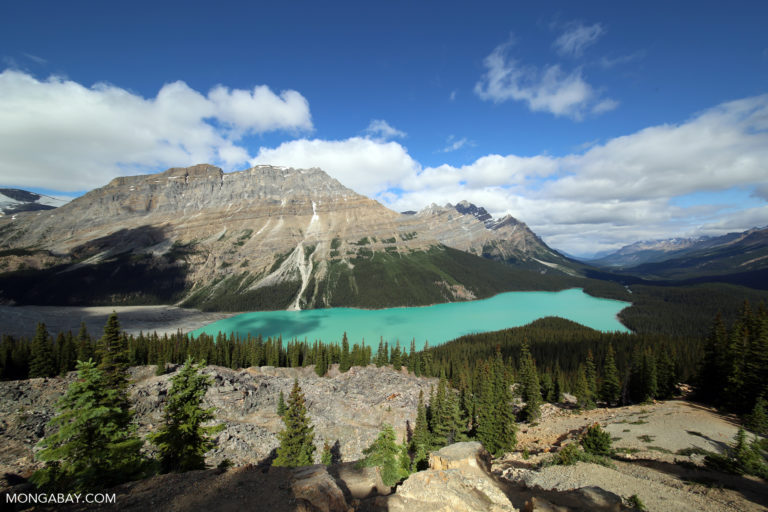 Peyto Lake, Alberta, Canada. Photo credit: Rhett A. Butler