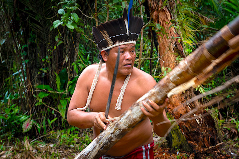 Indigenous agroforestry revives profitable palm trees and the Atlantic Forest