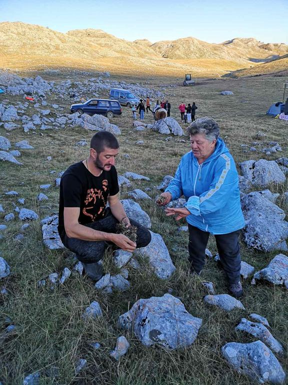Collecting herbs on Sinjajevina Mountain. Image courtesy of Milan Sekulović.