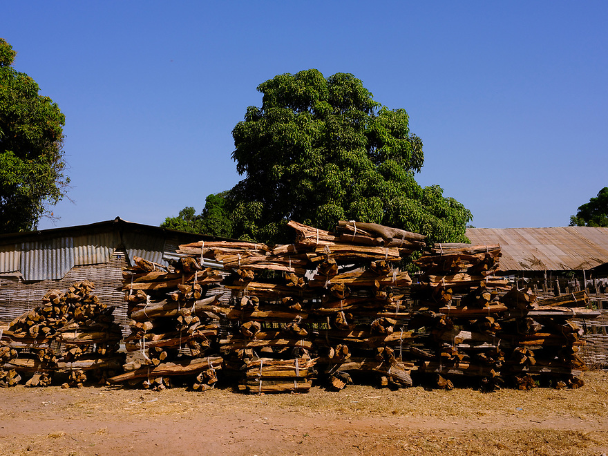 Stacked bundles of cut rosewood. Image by Ricci Shryock for Mongabay.