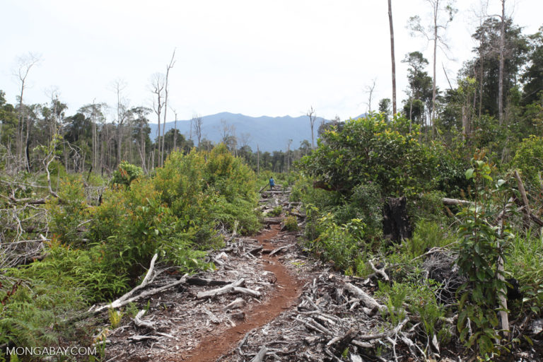 Palm oil grower looks to make amends for past deforestation in Indonesia