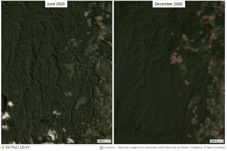 Satellite imagery shows deforestation closing in on the core area of FFI's tiger conservation project.