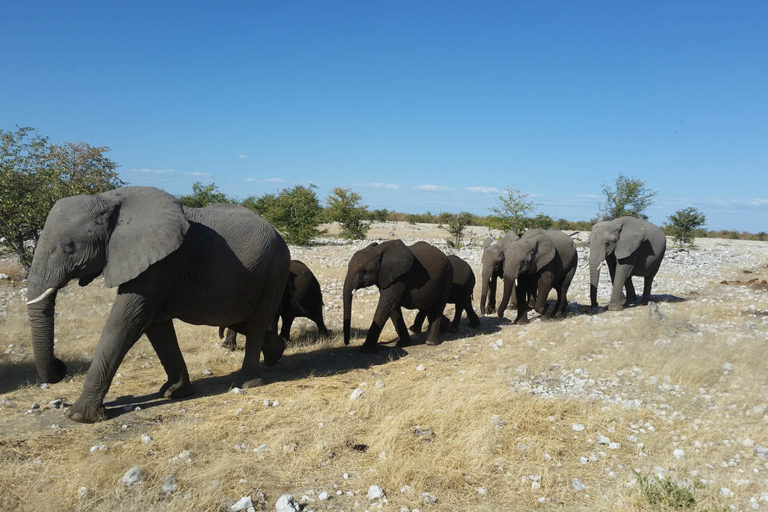 Namibian Elephants in Etosha. Photo credit: Stephan Scholvin