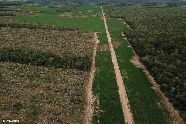 Recently cleared forest in the Bolivian Chaco for soy plantations. Image by Rhett A. Butler/Mongabay.