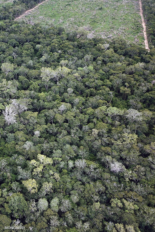 Forest clearance in Bolivia for soy plantations. Image by Rhett A. Butler/Mongabay.