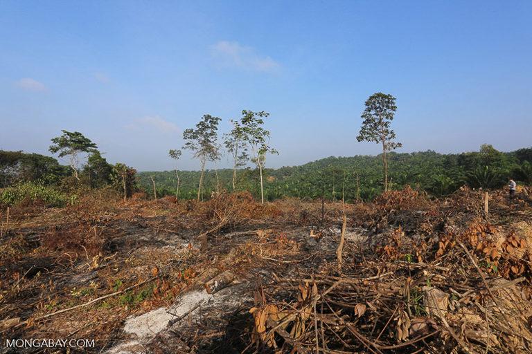 Lahan baru-baru ini dibuka untuk membuka jalan bagi kelapa sawit di Indonesia.  Gambar Merah A.  Butler / Mongabe.