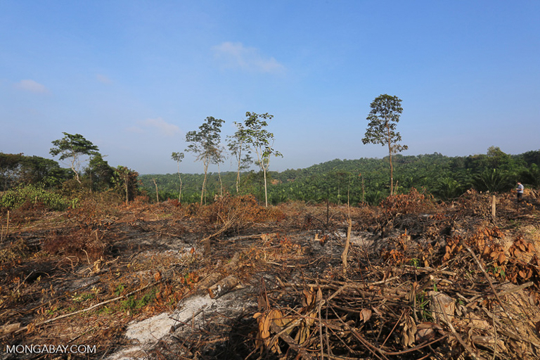 Land recently cleared to make way for oil palm in Indonesia. Image by Rhett A. Butler/Mongabay.