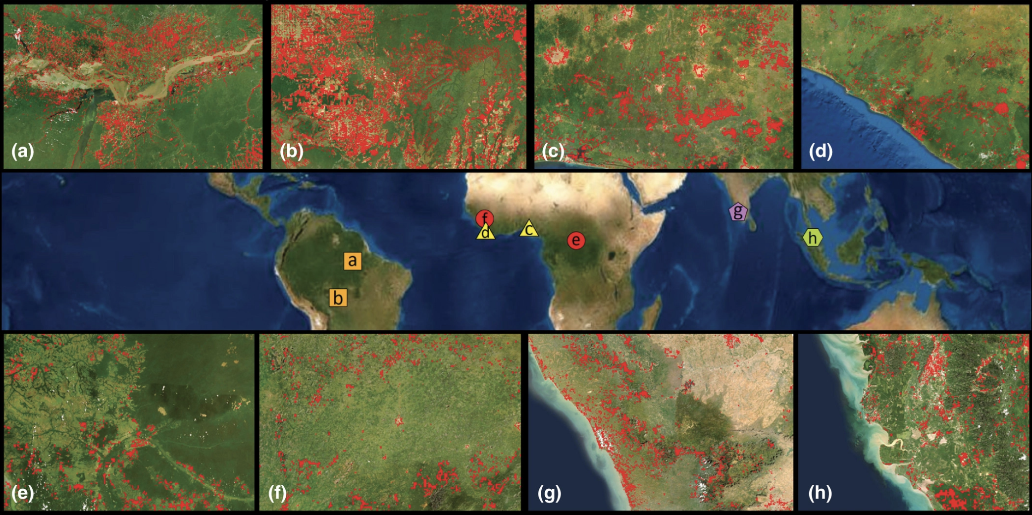 Select zoonotic disease emergence events resulting from anthropogenic disturbance of tropical forests with landcover change (red): (a, b) Hanta Virus Pulmonary Syndrome, (c, d) Lassa Fever, (e, f) Ebola, (g) Kyasanur Forest Disease, and (h) Nipah. Data source: ESA Climate Change Initiative © ‐ Land Cover led by UCLouvain (2017); ESRI, Maxar, Geosys, Earthstar Geographics, CNES/Airbus DS. USDA, USGS, AeroRID, IGN, and the GIS User Community