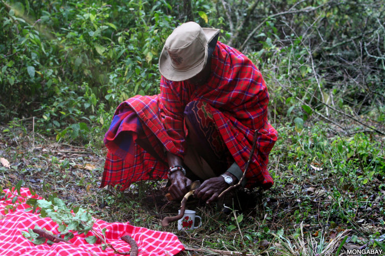 A Purko elder collecting medicinal plants in the Loita Hills Forest, Kenya. Photo credit: Rhett A. Butler.