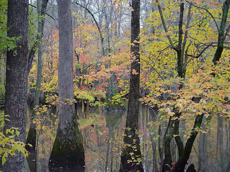 Cache River National Wildlife Refuge a été créé en 1986 pour protéger ce bassin versant très important de l'Arkansas, aux États-Unis.Il est répertorié comme une zone humide Ramsar d'importance internationale. Image de la région sud-est du US Fish and Wildlife Service via Wikimedia Commons (CC BY-SA 2.0)