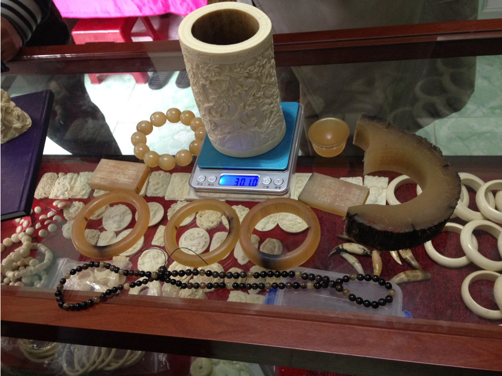 Horn and ivory products for sale in Vietnam. The brush pot on the scale is ivory, while the three bangles on the counter are rhino horn. A leftover piece of the outer portion of a white rhino horn, left, will be sold more cheaply for use in traditional Chinese medicine. Image by Lucy Vigne.