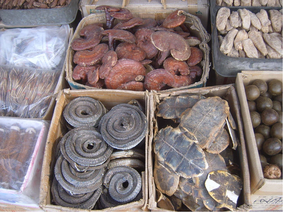 Dried plant and animal parts used in traditional Chinese medicine, including turtle shell (bottom right) and dried snake (bottom left), for sale at a market in Xi'an, China. Image by Vberger via Wikimedia Commons (Public domain).