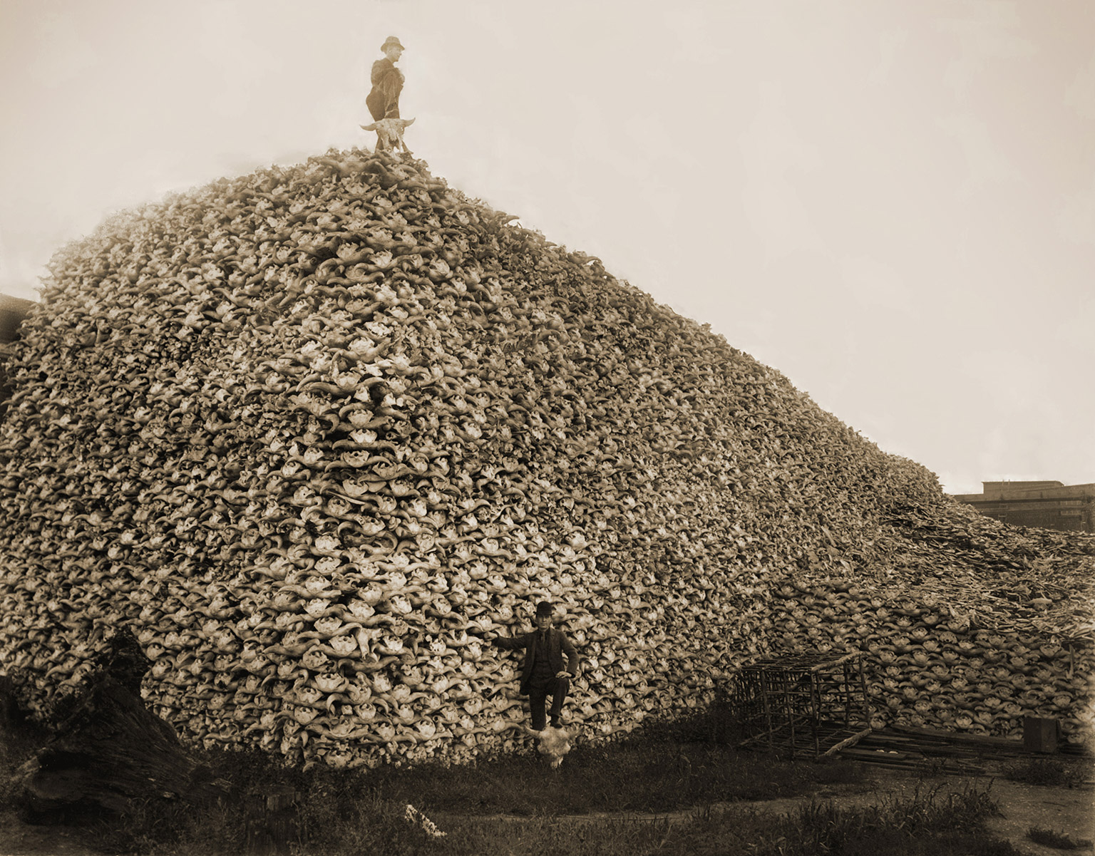 Men standing with pile of buffalo skulls, Michigan Carbon Works, Rougeville Michigan in 1892. Photo credit: Burton Historical Collection, Detroit Public Library