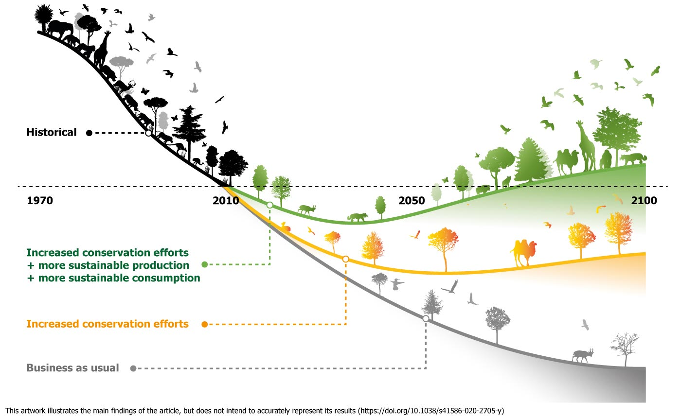Artwork illustrating historical biodiversity loss curve before 2010 (black) and different loss curves with (a) increased conservation efforts, with more sustainable production and more sustainable consumption (green curve rising above 2010 level between 2050 and 2100); (b) increased conservation efforts without more sustainable production and consumption (orange curve remaining below 2010 level by 2100); and (c) business as usual (grey curve remaining well below 2010 level by 2100).