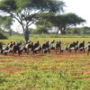 Ranger training in Zimbabwe