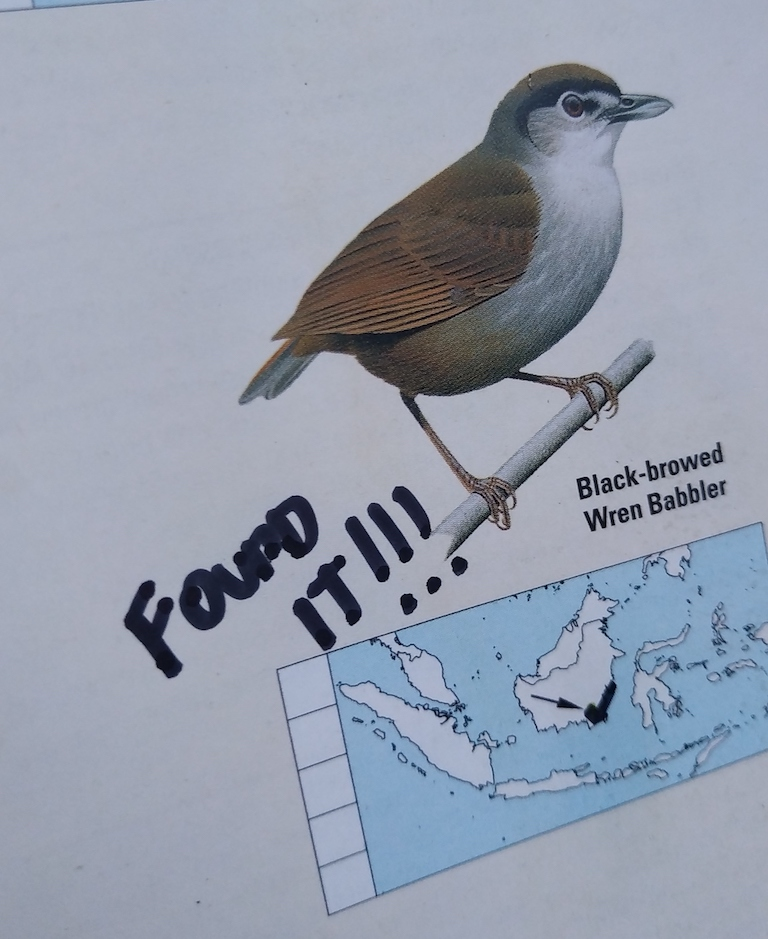 """The page in Akbar's copy of Birds of the Indonesian Archipelago that shows the black-browed babbler. After the bird was rediscovered last year, Akmar covered the question mark on the map with a """"V"""" and wrote """"Found it!"""" Image courtesy of Panji Gusti Akbar."""