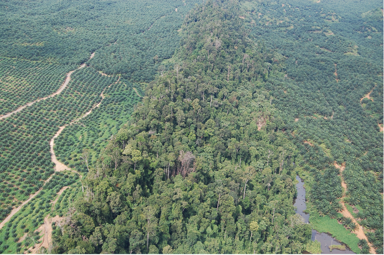 A forest fragment isolated in an oil palm-dominated landscape used by orangutans. Image courtesy of Marc Ancrenaz/HUTAN.
