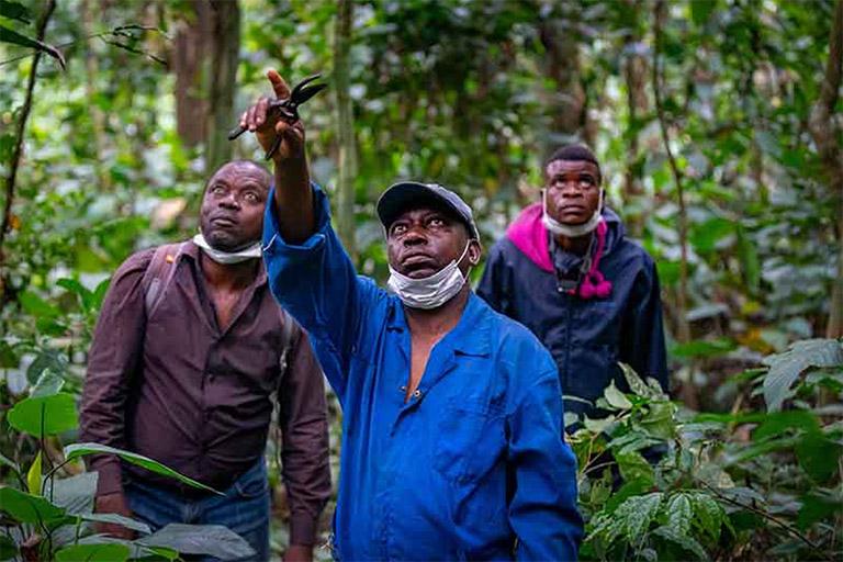 Monitoring the bonobo population in Bolobo (Bandundu Province) Democratic Republic of Congo. Image © Chris Scarffe/Synchronicity Earth