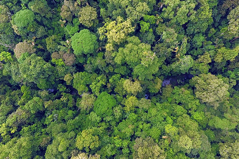 Aerial shot of Tesoro Escondido Reserve in the Ecuadorian Chocó forest. The above-ground biomass in this reserve is estimated to be 153 tonnes per hectare. Image © Mika Peck