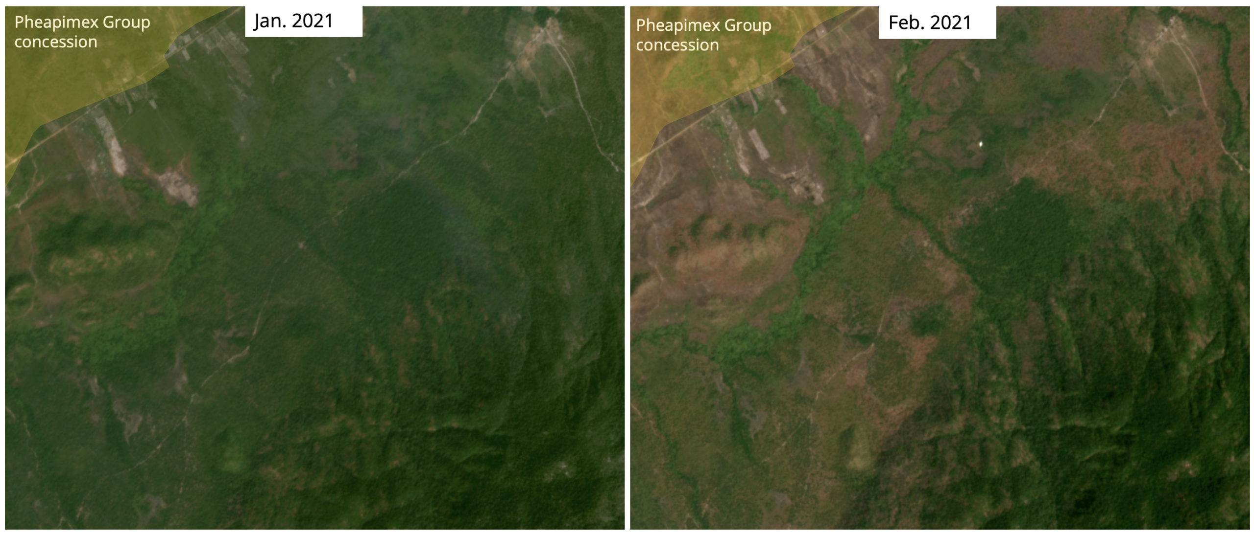Satellite imagery shows recent burned areas in another area near Pheapimex's concession. According to data from U.S. space agency NASA, fire activity began in the concession.