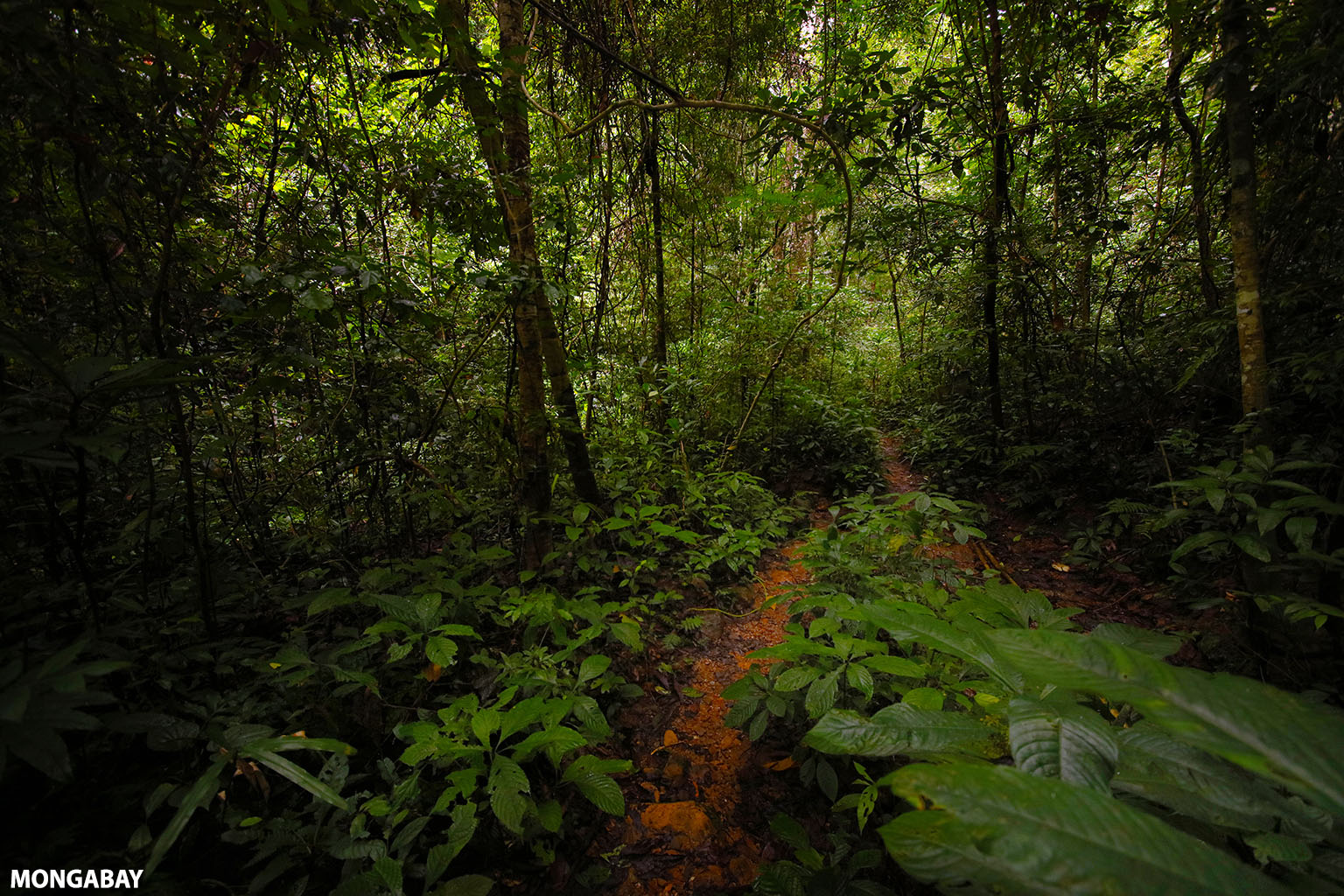 Rainforest in Southern China. Photo credit: Rhett A. Butler