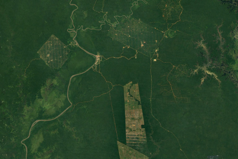 Deforestation for oil palm plantations in Boven Digoel Regency, Papua, Indonesia. Photo credit: NASA Landsat.