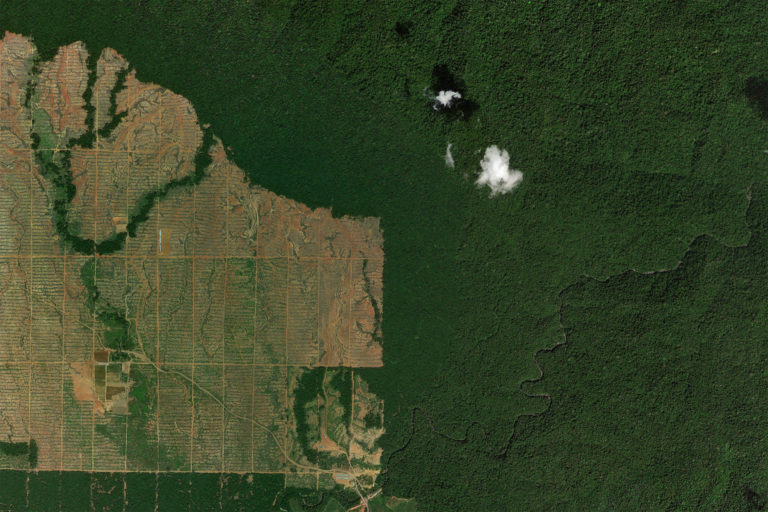 Rainforest clearing for oil palm in Gorontalo, Sulawesi in 2016. Photo credit: NASA Landsat