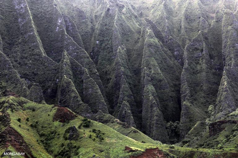Cliffs on the Napali coast of Kauai, Hawaii. Photo credit: Rhett A. Butler