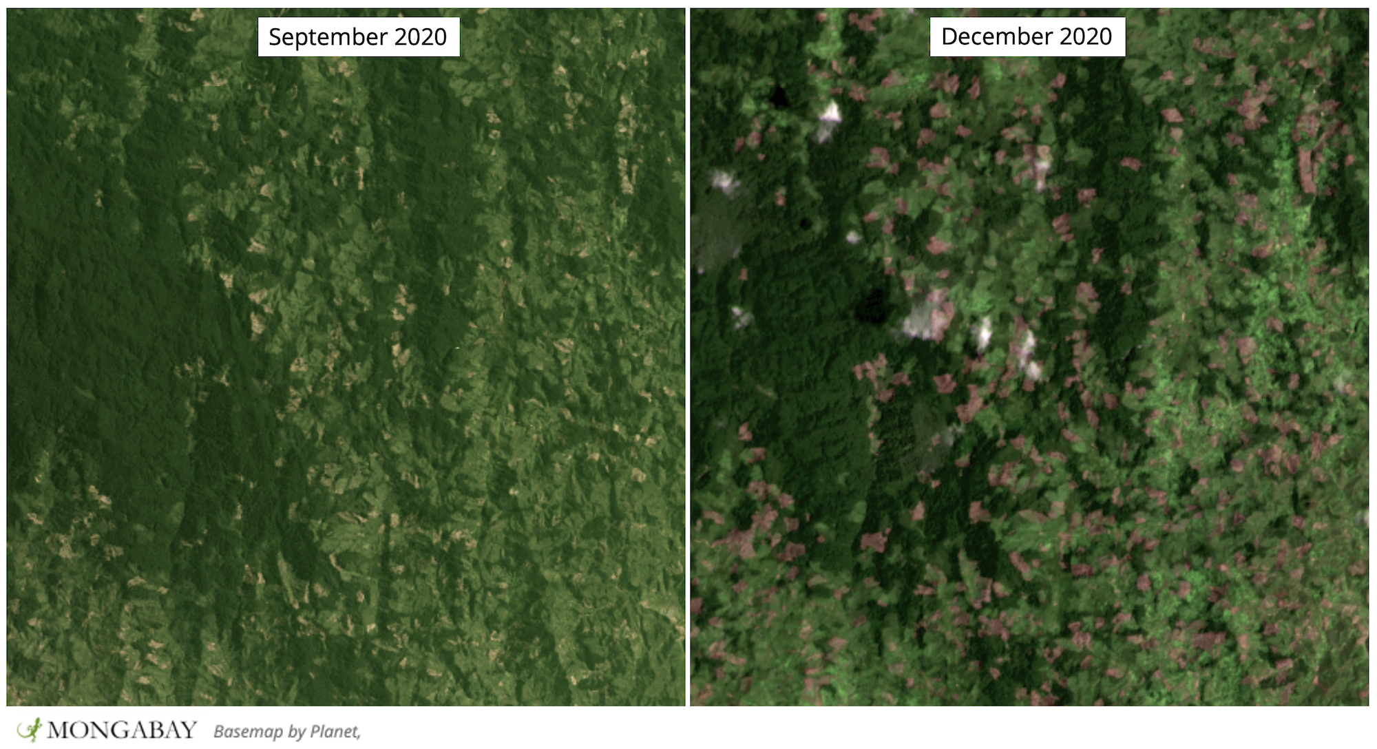Satellite imagery shows rapid deforestation in CAZ in late 2020.