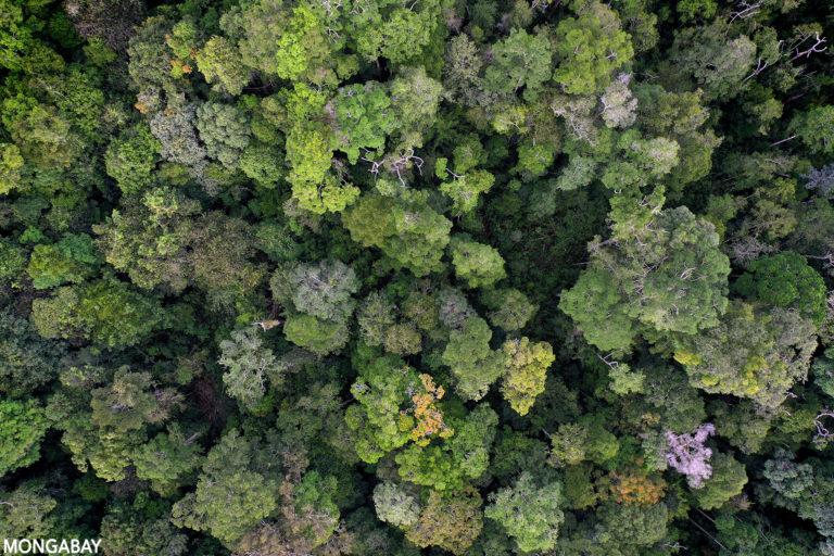 Rainforest in Kalimantan, Indonesian Borneo. Photo credit: Rhett A. Butler.