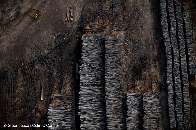 These stacked logs are evidence of the extensive clear-cutting of the Boreal Forest that takes place in order to develop the tar sands in northern Alberta. Photo © Greenpeace / Colin O'Connor