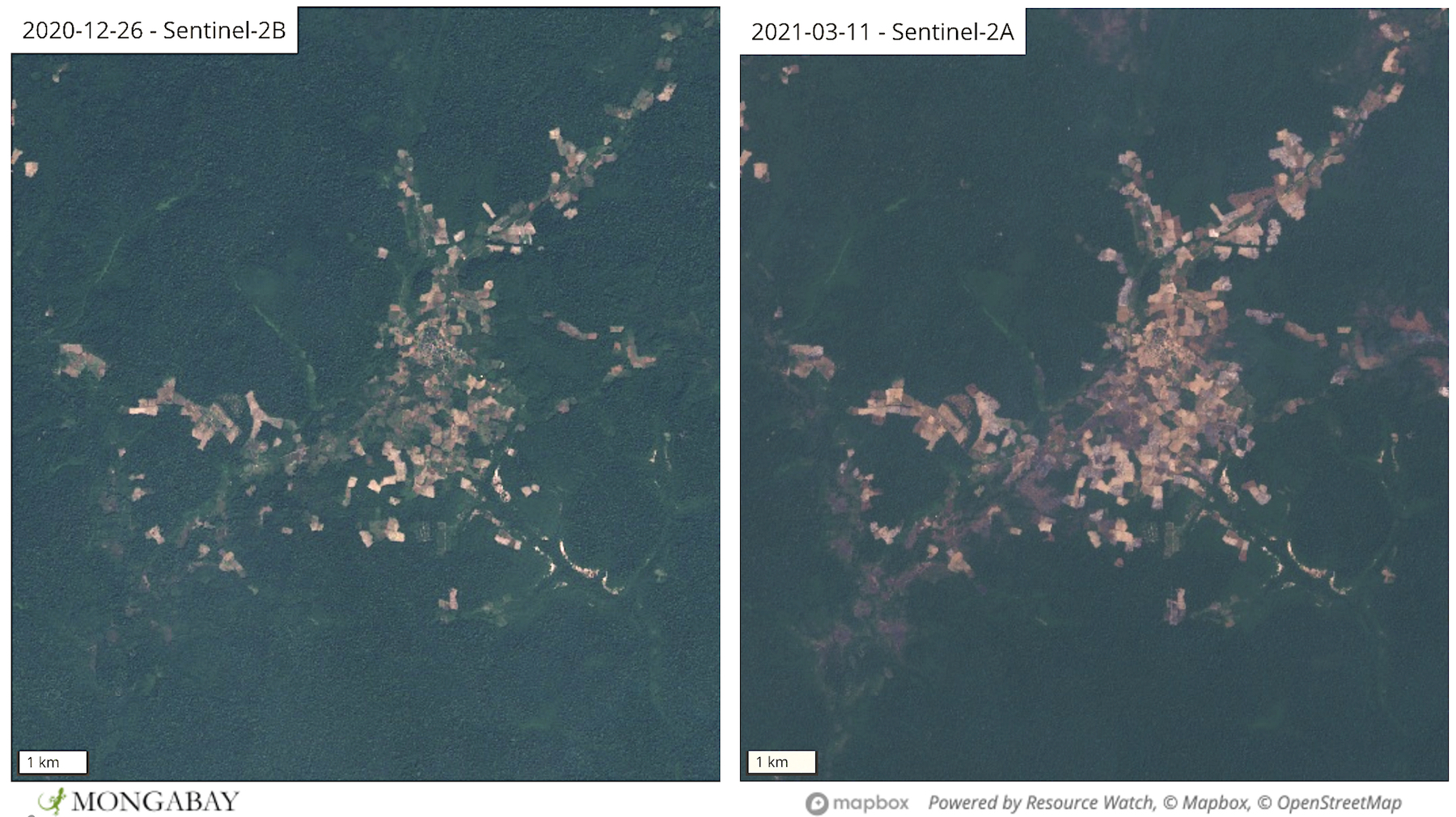 Satellite images show clearings expanding in the northern part of Prey Lang Wildlife Sanctuary.