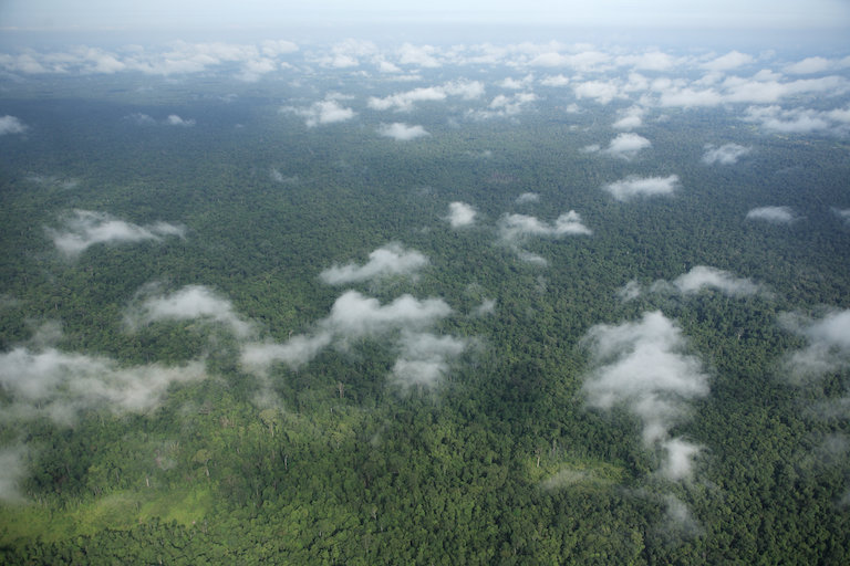 Prey Lang Wildlife Sanctuary contains one of Southeast Asia's last remaining lowland rainforests. Image by the Prey Lang Community Network via Wikimedia Commons (CC BY-SA 2.5).