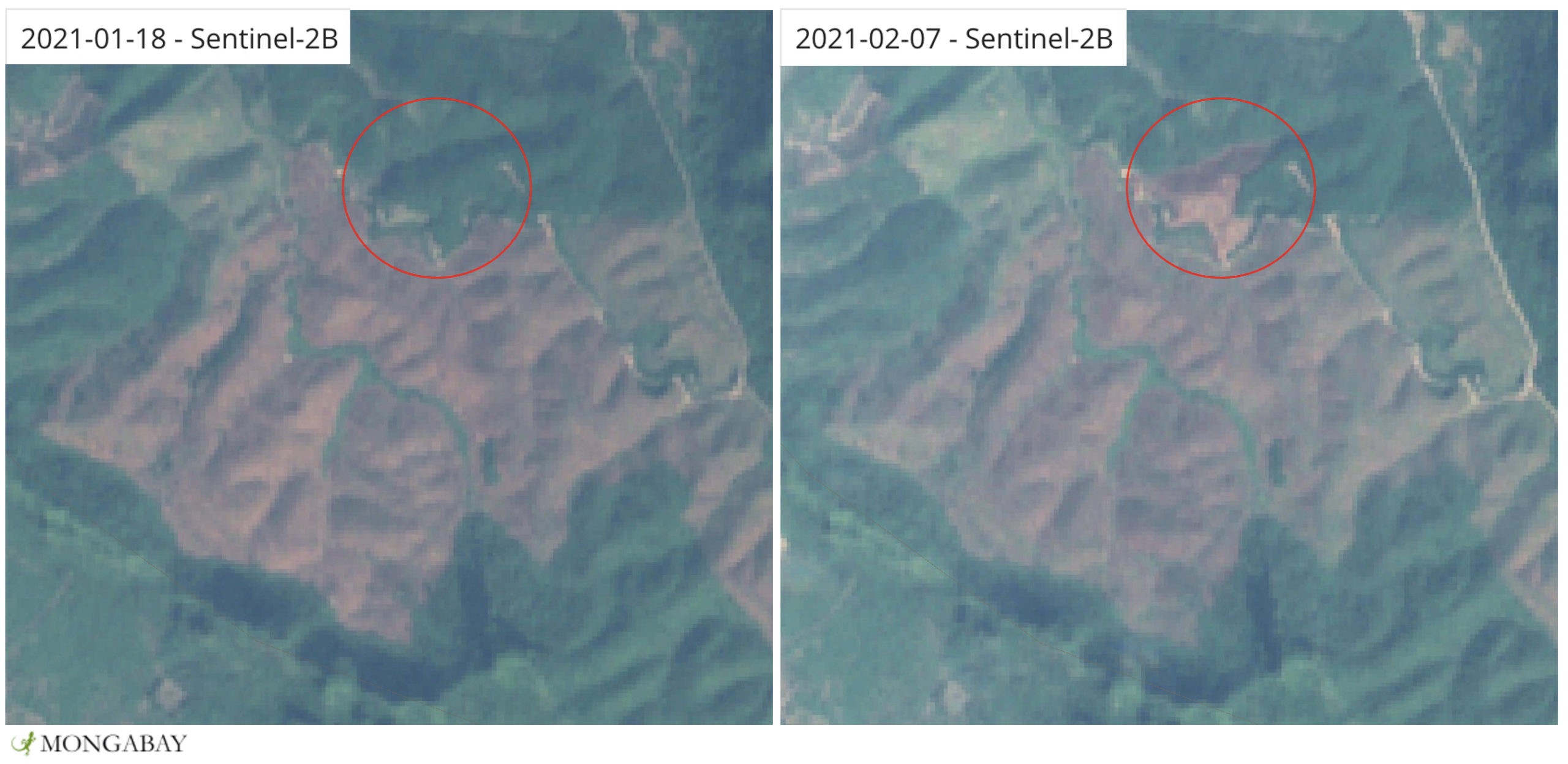 Satellite imagery shows an area of recent forest loss in an area just north of Van Long Nature Reserve that Tilo Nadler and other conservationists are hoping will be turned into a reserve in 2021 or 2022.