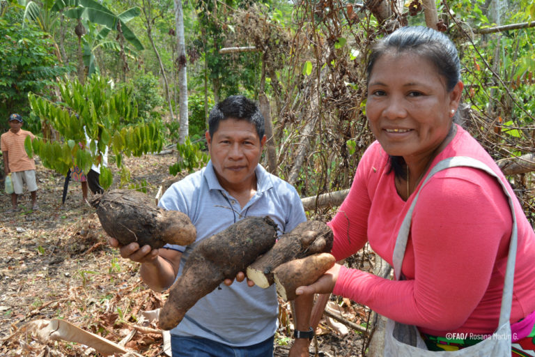 Carbon emissions from Indigenous-occupied forests were far lower than other areas, including protected areas, from 2003 to 2016. Image by Rosana Martin G./FAO.