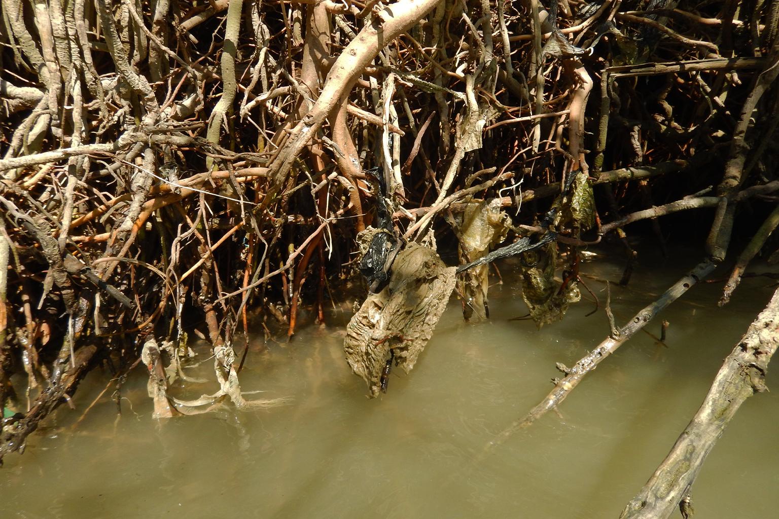 mangrove-diaper