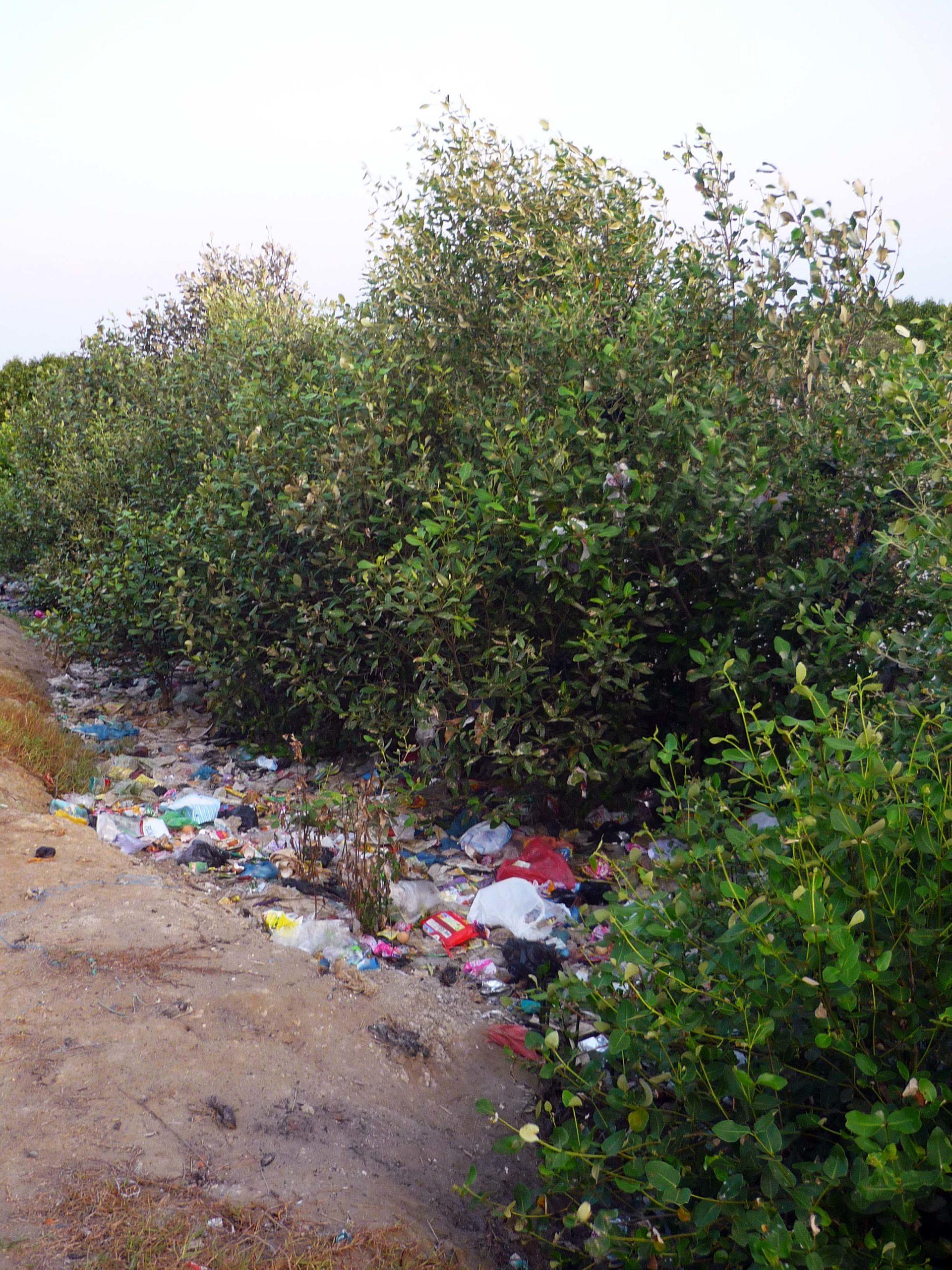 Trash pollutes a mangrove swamp near a village using it as a landfill.