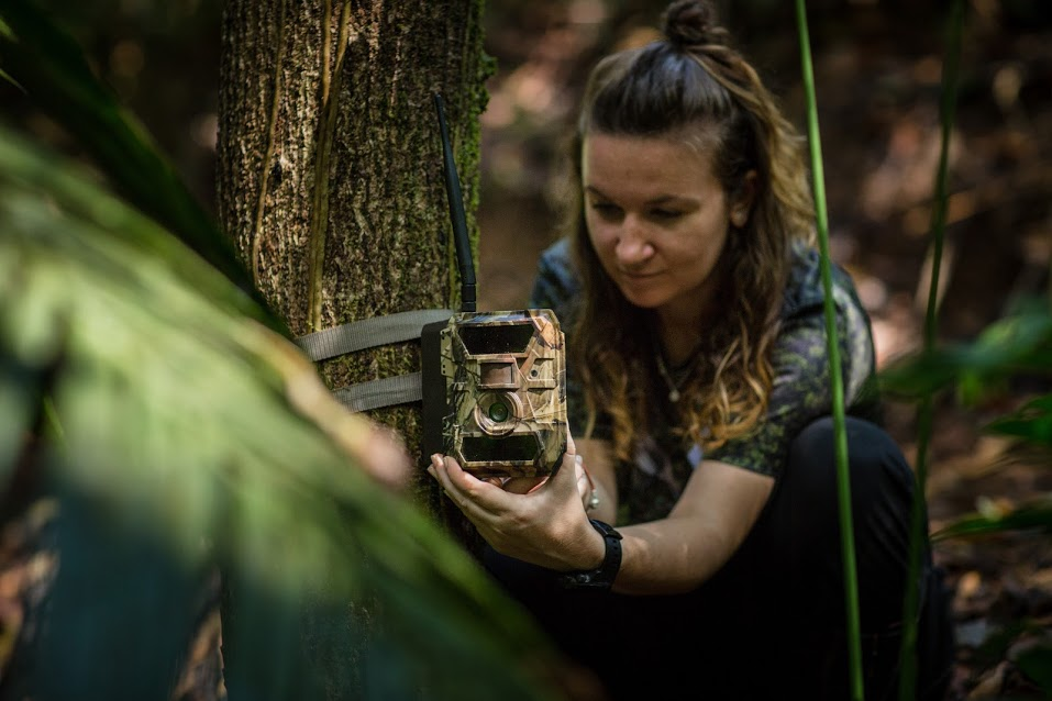 Conservation technology and wildlife manager, Eleanor Flatt, installs a GSM camera trap in the forests protected and managed by Osa Conservation.  Image by Marco Molina.