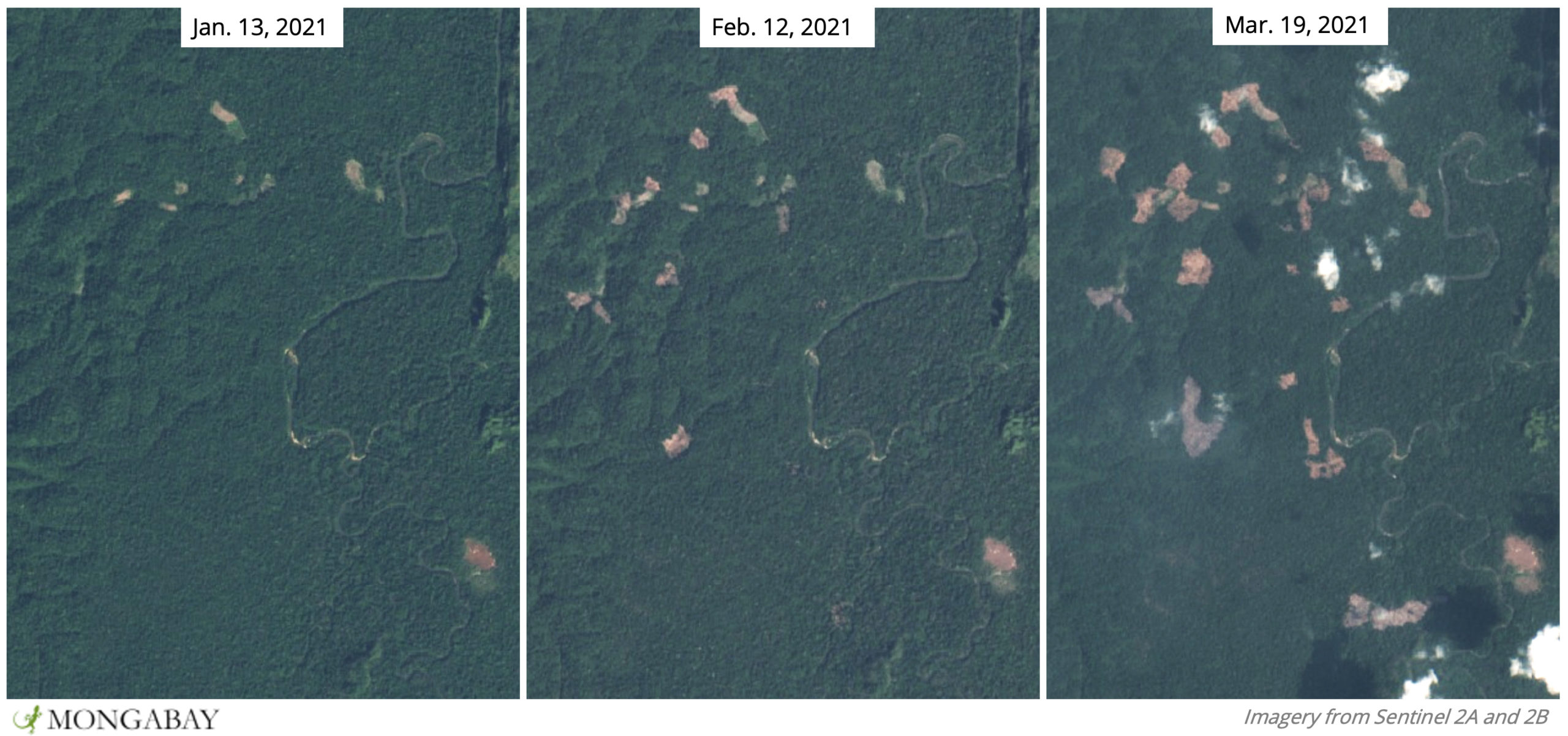Satellite data shows recent deforestation in one of the last areas where Gurney's pittas are known to live.