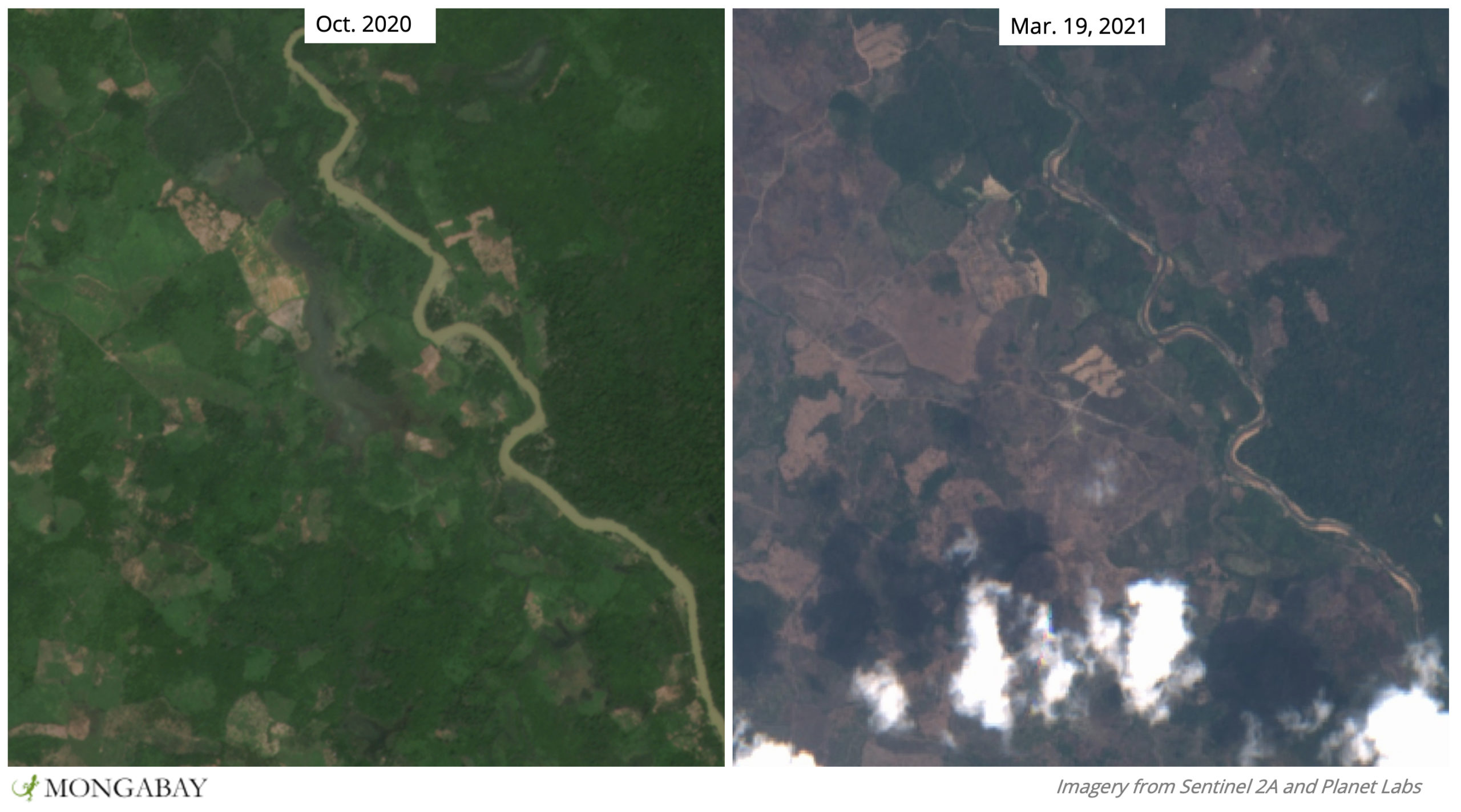Satellite imagery shows this area of Gurney's pitta habitat has been largely cleared on one side of the river.