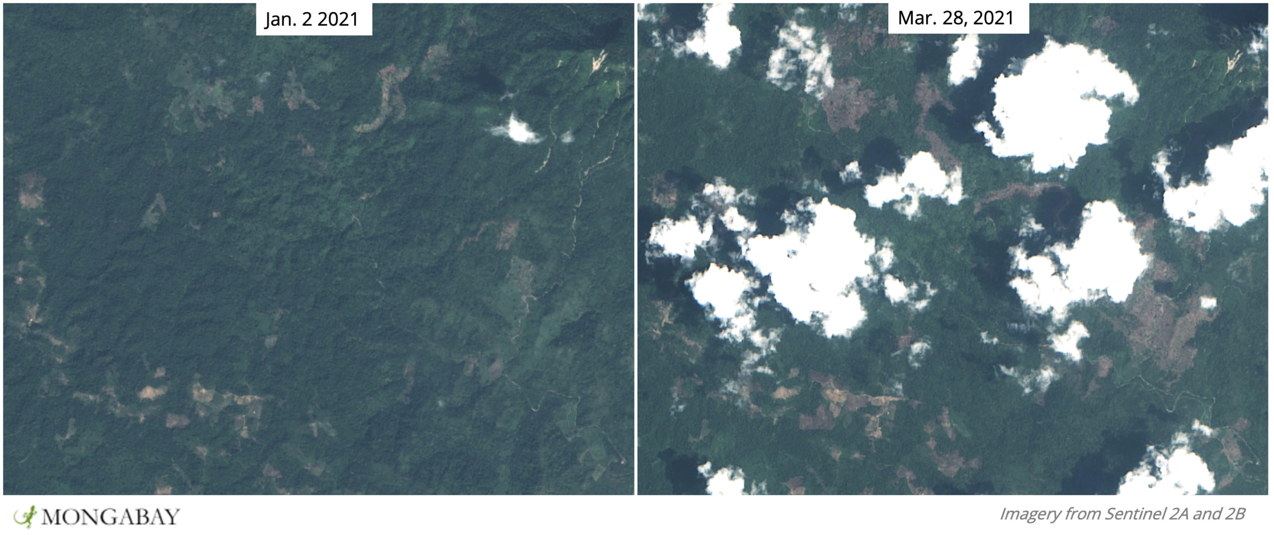 Recent deforestation inside Phnom Samkos Wildlife Sanctuary.