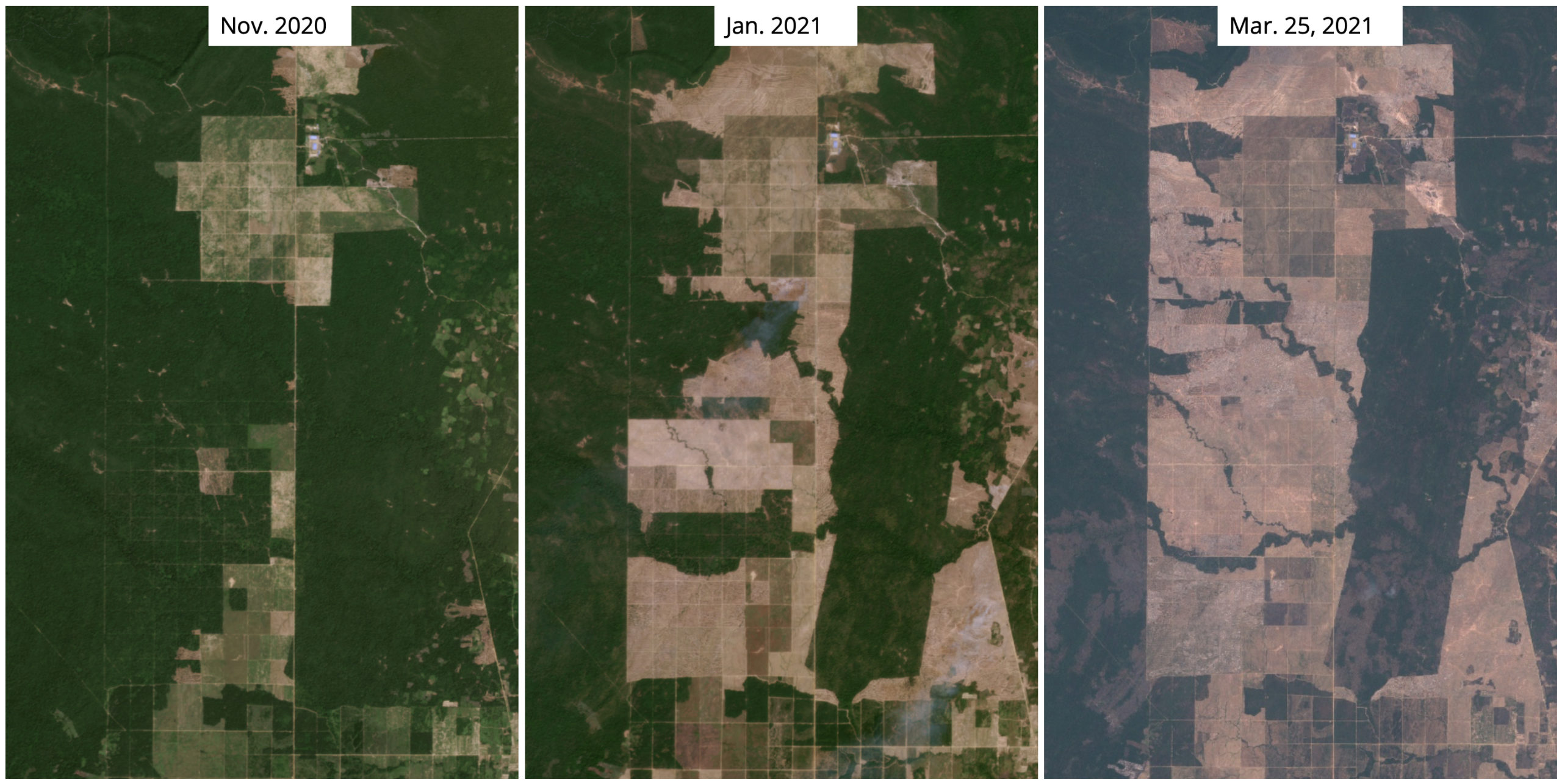 Satellite imagery from Planet Labs and Sentinel 2B shows recent large-scale deforestation of primary forest right outside Prey Land Wildlife Sanctuary.